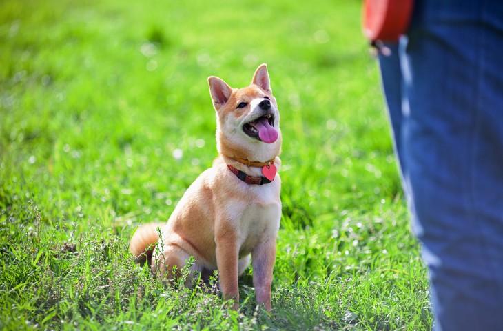 ОКД для собак: с какого возраста